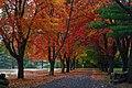 New England driveway.jpg