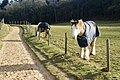 New Friends Along the Pilgrims' Way Near Chilworth - geograph.org.uk - 1705720.jpg