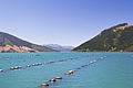 New Zealand Mussel farm-6359.jpg