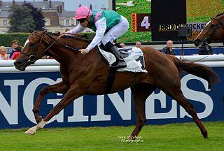 New Bay British-bred Thoroughbred racehorse