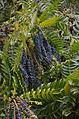 Ninfa Garden Plants 1.JPG