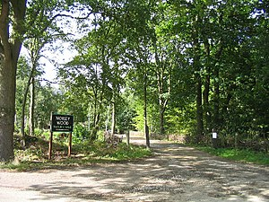 Norsey Wood - Image: Norsey Wood, Billericay geograph.org.uk 53925