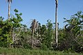 Northern Highway, damages by hurricane Deans - panoramio.jpg