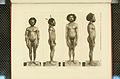 Nova Guinea - Vol 3 - Plate 39.jpg