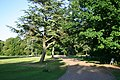 Nowton Park - geograph.org.uk - 21945.jpg