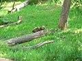 OKC Zoo May 2007 - 62 (497243411).jpg