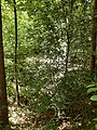 Oberrimbacher Erdfälle 202006 01.jpg