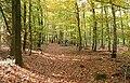 Oberstes Holz Laubwald.jpg