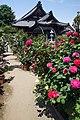 Ofusa-kannon Kashihara Nara pref Japan02s3.jpg
