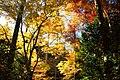 Ohara 2008-11-26 (3261973710).jpg
