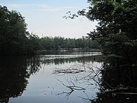 Quiet lake surrounded by tall, leafy green trees