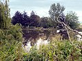 Old Mill Pond - geograph.org.uk - 563710.jpg