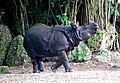 One Horned Rhinocerous 05.jpg