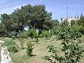 Orto Lecce collezione frutti.JPG