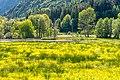 Ossiach Alt-Ossiach Bleistätter Moor Bäume und Büsche 23052019 7030.jpg