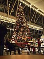 PPG Wintergarden Tree (2112139306).jpg
