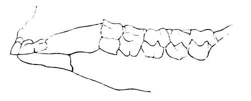 Teeth - WikiVisually