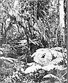 PSM V86 D046 Tufts of mosses hanging above tree ferns.jpg
