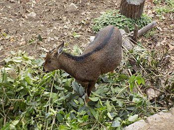 Padmaja Naidu Zoological Park.jpg