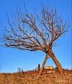 Parco Talon Casalecchio di Reno.jpg