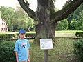 Park pałacowy w Żmigrodzie -14.jpg