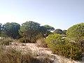 Parque de Doñana 20210610 16.jpg