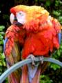 Parrot MSX2 palette.png