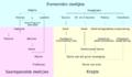 Particle overview af.png