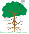 Parts of the tree in the Chuvash language Строение дерева на чувашском языке.png