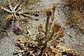 Pasargadae (19345120000).jpg
