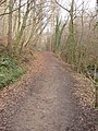 Path in Flatts Woods, Barnard Castle - geograph.org.uk - 1127465.jpg