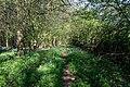 Path in Pasture Wood - geograph.org.uk - 412325.jpg