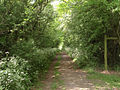 Path through Halloughton Wood - geograph.org.uk - 811917.jpg