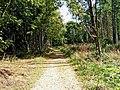 Path through Shrawley Wood - geograph.org.uk - 1484935.jpg