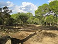 Path to Cala Macarelleta (30097433536).jpg