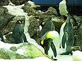 Penguins Loro Parque 03.JPG