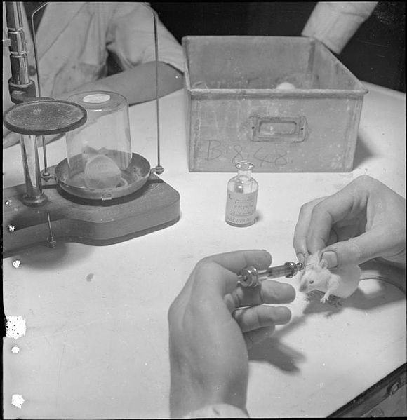 File:Penicillin Past, Present and Future- the Development and Production of Penicillin, England, 1943 D16967.jpg