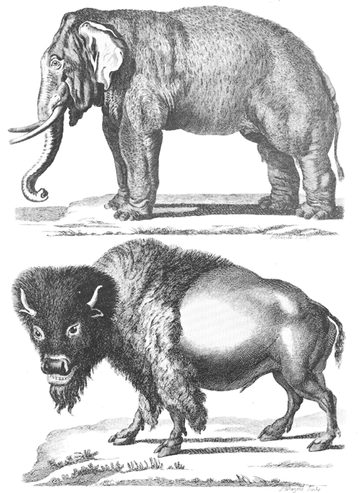 Pennant Thomas Hist of Quadrupeds 1793