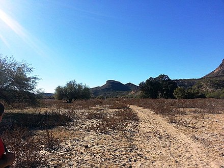 Hiking trail leading to Indian Mesa (in the background): The hiking trail is located on a portion of a canal which the Hohokam built in AD 700. The canal is now filled with soil. Peoria-Lake Pleasant Regional Park-Hiking trail.jpg