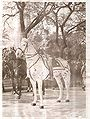 Perón montado a caballo stitched.jpg