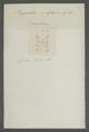 Peripatus juliformis - - Print - Iconographia Zoologica - Special Collections University of Amsterdam - UBAINV0274 103 01 0003.tif