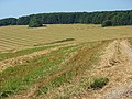 Pertwood Down - geograph.org.uk - 539204.jpg