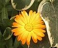 Pichilemu - Jardines de Pichilemu (2194797717).jpg