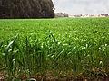 PikiWiki Israel 18812 Field.jpg