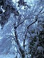 PikiWiki Israel 43192 שלג במרום גולן.jpg