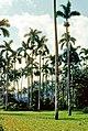 Pinar del Río (1983) 03.jpg