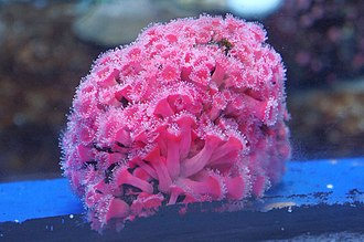Shades of red - Pink coral