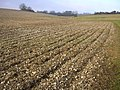 Ploughed chalk field at Hog Leaze - geograph.org.uk - 95252.jpg
