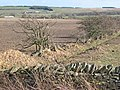 Ploughed fields and hedgerow - geograph.org.uk - 357735.jpg