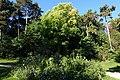 Pond @ Parc Montsouris @ Paris (29860700570).jpg